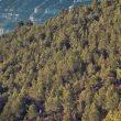 Montserrat Skyrace 2021